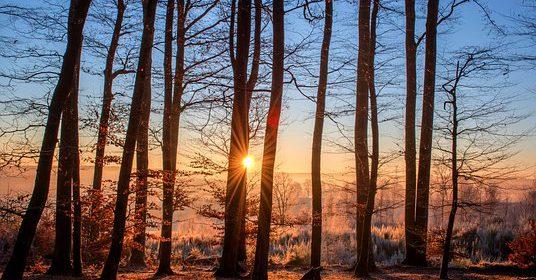 La forêt : un coin de paradis pour vos enfants !