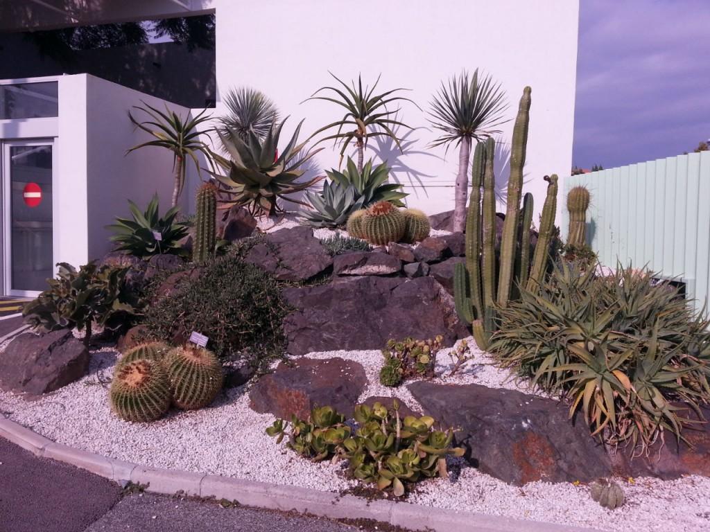 Massif de plantes grasses avec l' « Echinocactus grusonii » ou coussin de belle-mère
