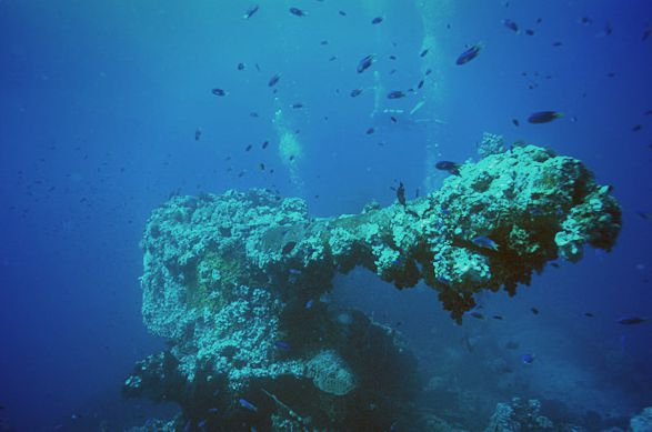 Les fonds marins regorgent de trésors.
