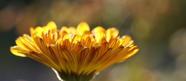 Dame nature et minceur : la phytothérapie à la rescousse